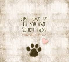 Quotes About Dogs And Friendship Classy Quotes About Dogs And Friendship WeNeedFun