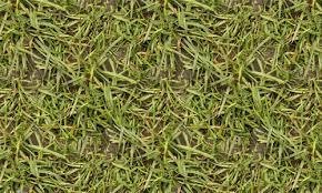 Absolutely Free Seamless Grass Textures Naldz Graphics