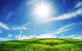 Green Grass And Blue Sky Wallpaper Download Wallpaper Nature Free