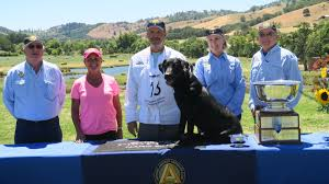 Amateur club national retriever