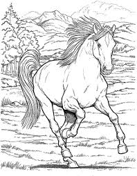 Small Picture Realistic horse coloring pages for adults ColoringStar