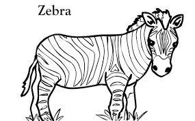 zebra coloring book 17
