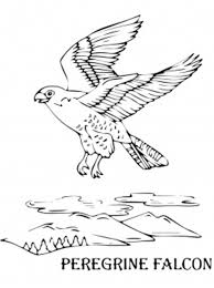 Small Picture Flying Bird Coloring Pages Flying Falcon Bird Coloring Pages
