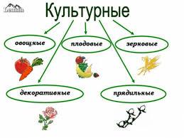 Картинки Растения Культурные  картинки растения культурные