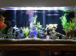 Fish Tank Fish Tank Gallon Fish Tank Combinations Reef Compatibility