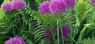 Small Picture Anne Macfie Garden Design Landscape Designers in Glasgow homify
