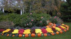 13 best Fall Landscaping Ideas images on Pinterest | Autumn, Garden and  Home decor
