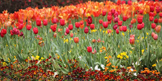 flower gardens pictures. The 15 Best Botanical Gardens In California Flower Pictures N