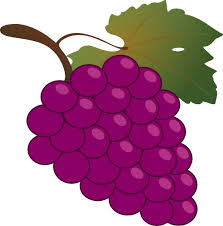 grapes clipart black and white. grapes clipart black and white