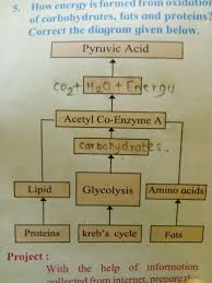 How Energy Is Formed From Oxidation Of Carbohydrate Fats