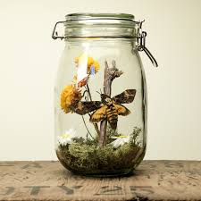 glass jar terrarium kit with head moth uk only