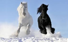 horses wallpaper black and white. Interesting Wallpaper HD Wallpaper  Background Image ID351442 In Horses Black And White