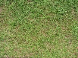 Tall Grass Seamless Texture