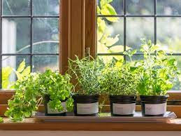 how to plant a windowsill herb garden