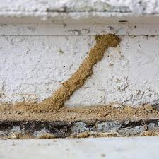 Image result for termite control cost