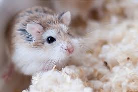 Risultati immagini per piccoli animali