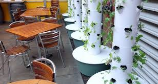 Small Picture Agriculture in India Aeroponic Kitchen gardenHamari Krishi