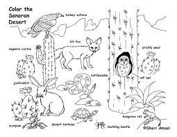 Small Picture sonoran desert coloring pages Google Search Desert Unit