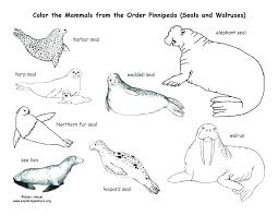 Baby Seal Coloring Pages Coloring For Babies Amvame