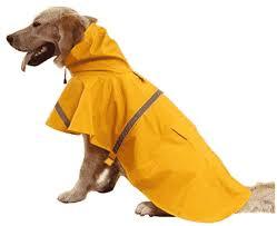 Best Waterproof Dog Raincoat Reviews Buyers Guide 2019