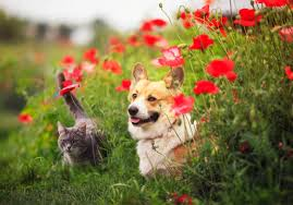 4,595 Dog Cat Summer Stock Photos, Pictures & Royalty-Free Images - iStock