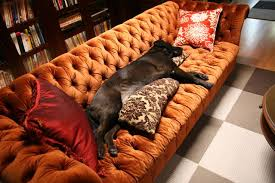 chesterfield furniture history.  furniture chesterfield sofas  dog intended furniture history