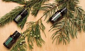 3 essential oils from dōterra you need this holiday season
