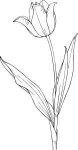 Free Tulipán Tetování Vector Graphics Vectorhqcom