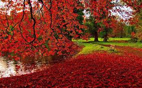 Autumn HD Wallpaper Desktop Background ...