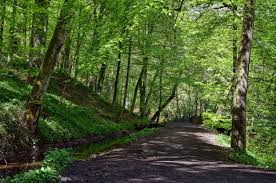Road forest trees nature wallpaper ...