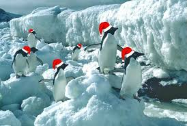 christmas penguin wallpaper. Exellent Penguin Ice And Christmas Penguins Wallpaper In Penguin E