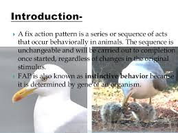 Fixed Action Pattern Example Inspiration Fixed Action Pattern Fap
