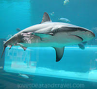 shark tank for water slides and leap of faith underwater water slide atlantis38 underwater