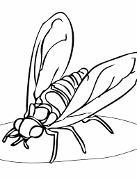 Small Picture Pages Free Free Insect Coloring Pages Coloring Pages Insects