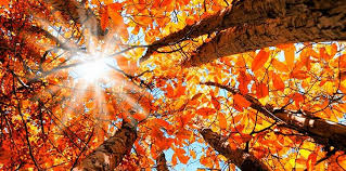 """Why Do The British Say """"<b>Autumn</b>"""" Instead of """"<b>Fall</b>""""? 