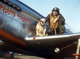 Image result for Luke air force bulldog images