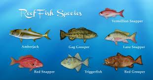 Coastal Alabama Fish Species Including Gulf Of Mexico Back