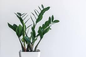 1. Eternity plant