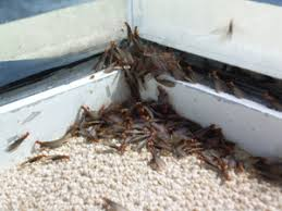 Image result for sooner you can get those termites out of your home, the better