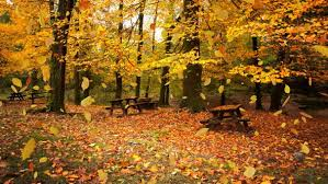 Image result for autumn leaves falling