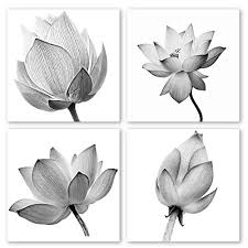 Black and White Floral Framed Prints: Amazon.com