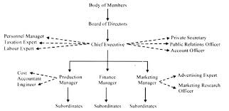 Traditional Organisation 3 Types With Diagram