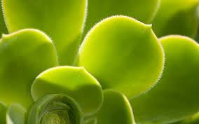 Green leaf HD wallpaper #950427