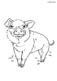 Choose a design, print it out, and color it in. Animals Coloring Pages Free Printable Animals Coloring Sheets Page 17