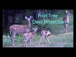 7 Ways To Keep Deer Out Of Your Yard  WikiHowKeep Deer Away From Fruit Trees