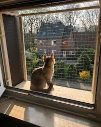 Katzensicherung Instagram Photos And Videos