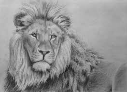 lion drawing. Unique Drawing How To Draw A Lion In Pencil To Drawing T