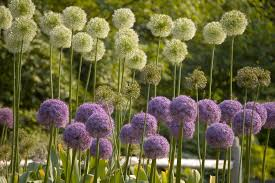 flowers for garden. File:Flowers At Brooklyn Botanical Garden.jpg Flowers For Garden E
