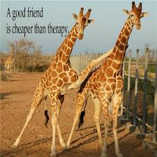Giraffe Quotes New Giraffe Quotes And Sayings On QuotesTopics