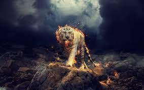 Raging White Tiger Wallpapers - White ...